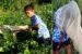 Keanui's Biodiversity Bonanza